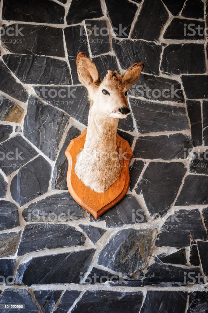 Little Head of a Deer hanging on a Wall stock photo