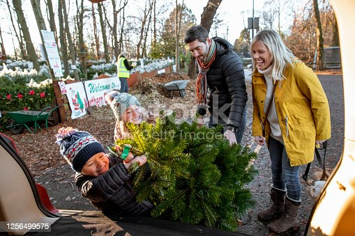 A family with two children wearing warm clothing shopping for a Christmas tree at a Christmas market in Northeastern England. The young boy is putting the Christmas tree in the trunk of the car and struggling to the amusement of his family.