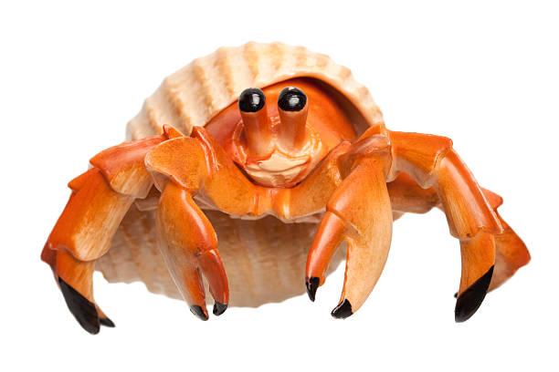 little bernard-l'hermite - crabe photos et images de collection