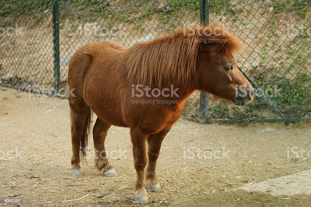 Little Horse royalty-free stock photo