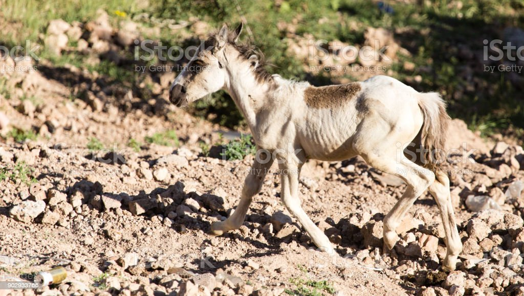 A little horse runs in the nature stock photo