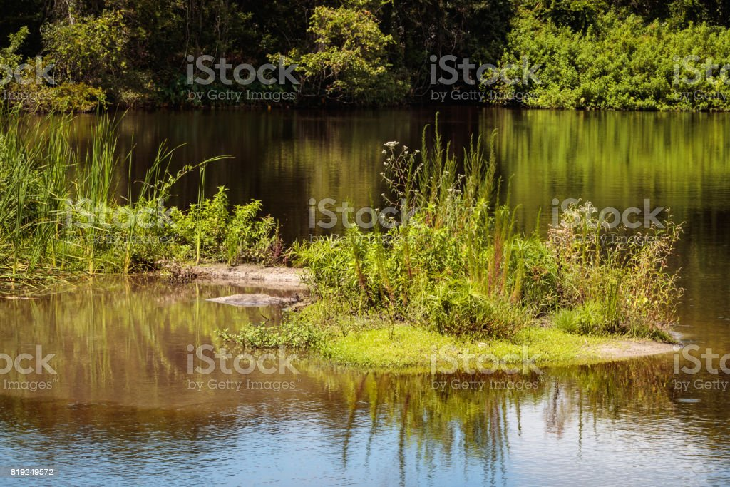 little island on lake plant growing stock photo