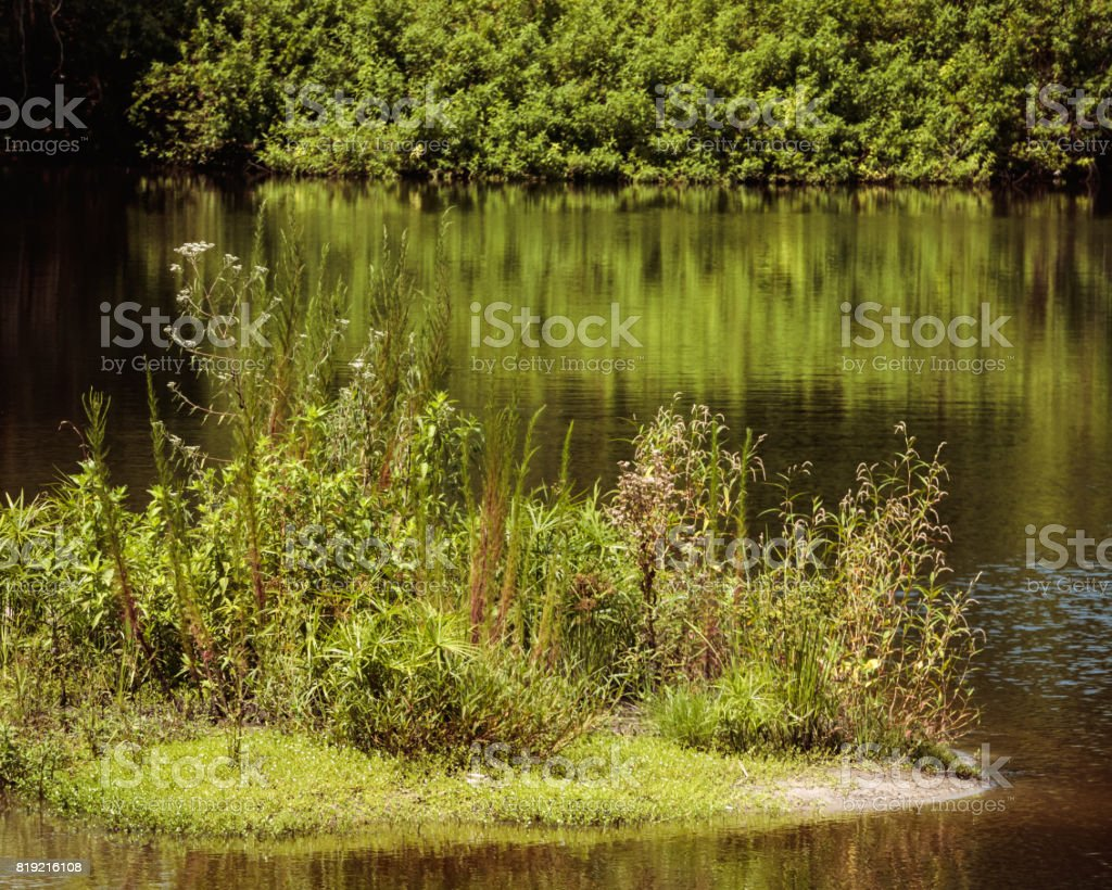 little island on the lake vegetation close up photo stock photo