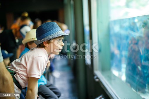 istock Little kid boy admire different reptiles and fishes in aquarium 844312748