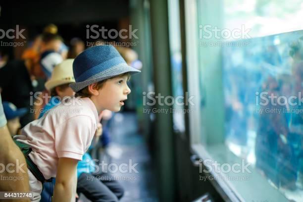 Little kid boy admire different reptiles and fishes in aquarium picture id844312748?b=1&k=6&m=844312748&s=612x612&h= hl6gshwov1od6edimiya2iasl7vygeg2qobwq vkmk=