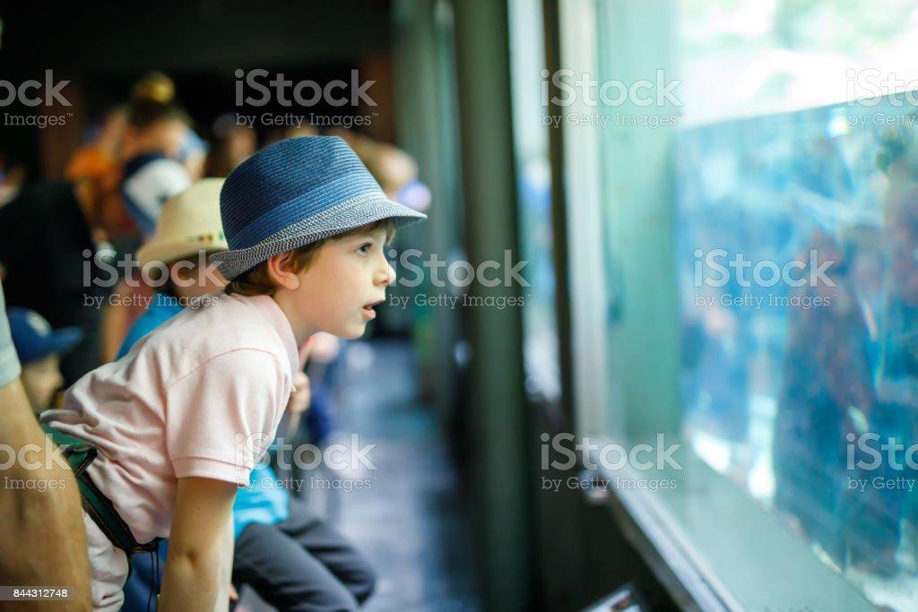 Niño niño admirar diversos reptiles y los peces en el acuario - foto de stock