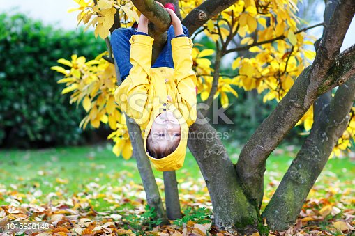 Cute little kid boy enjoying climbing on tree on autumn day. Preschool child in colorful autumnal clothes learning to climb, having fun in garden or park on warm sunny day.