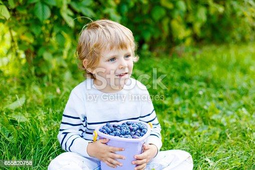 istock little kid boy picking fresh berries on organic blueberry field farm 655820758
