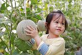 小さな子供女の子温室メロン農場のメロンを保持しています。