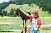 Little kid girl playing with goats during summer vacation in farmland