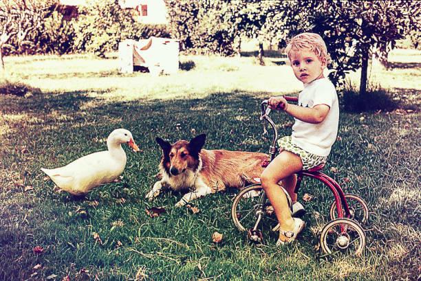 małe dziecko na jej trójkołowym rowerze z dokiem i psem - archiwalny zdjęcia i obrazy z banku zdjęć