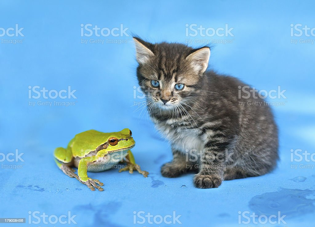 Little kitten and frog royalty-free stock photo