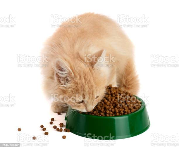 Little kitten eats a dry food isolated on white background picture id890787062?b=1&k=6&m=890787062&s=612x612&h=0linw1mgbsbjqf3vdpjajirpx7bcmzgvroyapmgyexc=