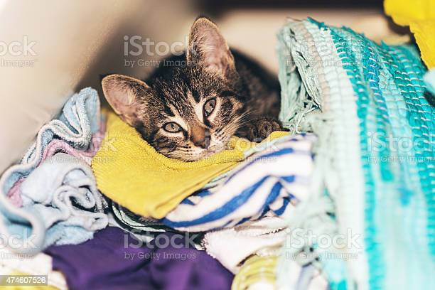 Little kitten hiding in the laundry box picture id474607526?b=1&k=6&m=474607526&s=612x612&h=wp269safkacq1wfueezw edqflvwptrw 2cea8rwd5m=