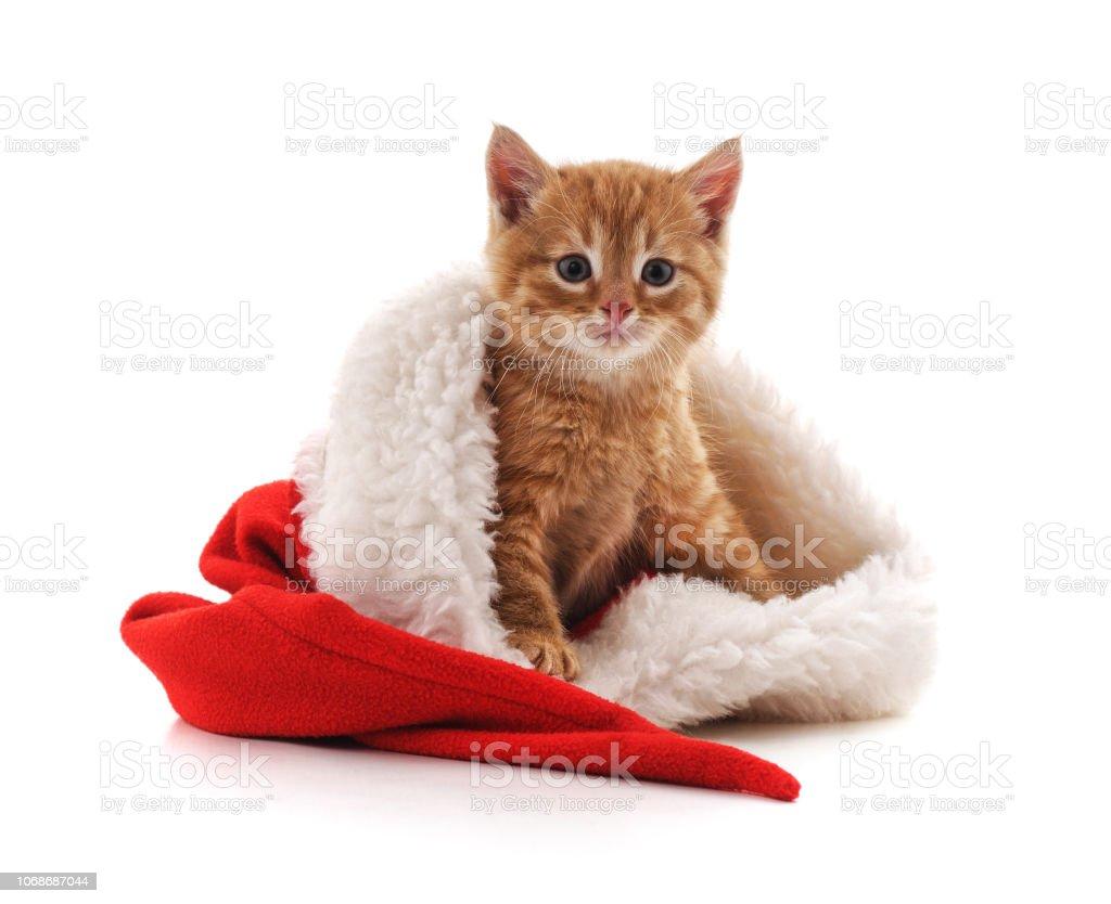 Kitten Christmas.Little Kitten In A Christmas Hat Stock Photo Download Image Now