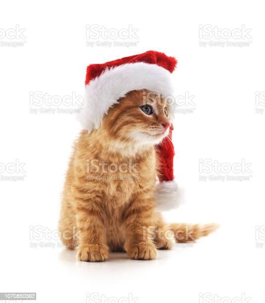 Little kitten in a christmas hat picture id1070850362?b=1&k=6&m=1070850362&s=612x612&h=bo4ku b64qk 6 2otutlfxga6ho xi1pfaokucb wxu=