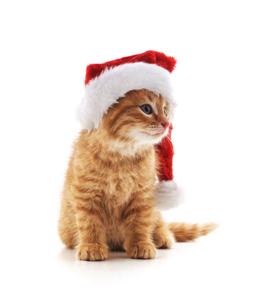 Little kitten in a christmas hat picture id1070850362?b=1&k=6&m=1070850362&s=612x612&w=0&h=wclsejlh5itp9eizis9suxpnywog1uaudcdklfgnfx0=