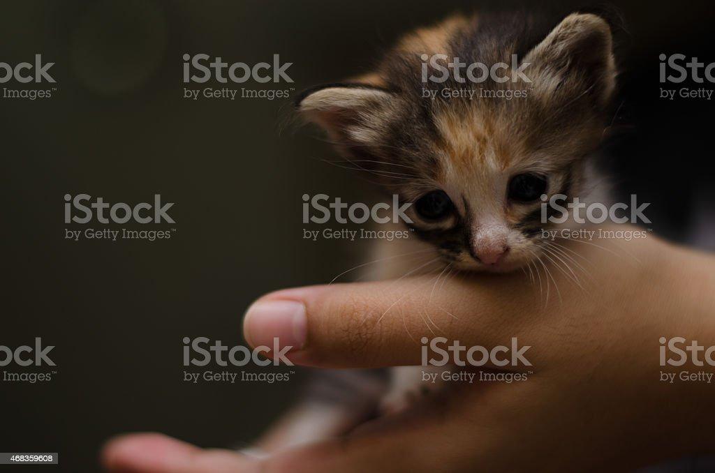 Little kitten in palm royalty-free stock photo