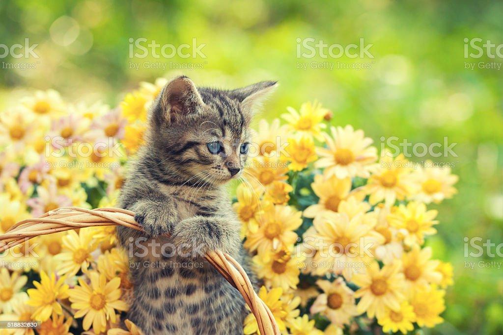 Kleines Kätzchen im Garten mit Blumen auf den Hintergrund – Foto