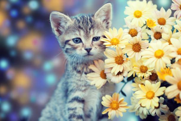 Little kitten in the garden with flowers picture id639134034?b=1&k=6&m=639134034&s=612x612&w=0&h=tx9 c1pkqn9eku7rninchd9zy7qlwzqi5wfnmyamdim=