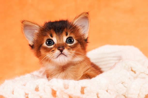 kleines kätzchen in hut - katzenhüte häkeln stock-fotos und bilder