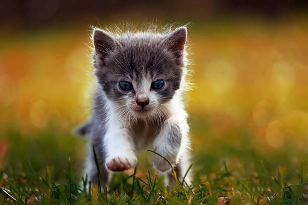 Little kitten is running picture id485902356?b=1&k=6&m=485902356&s=612x612&w=0&h=7gmc4tcy g jf47thdzodssyitcpywxmlzjmghzzqk8=