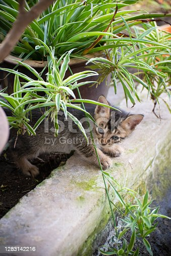 istock Little kitten look curiosity at flower garden. 1283142216