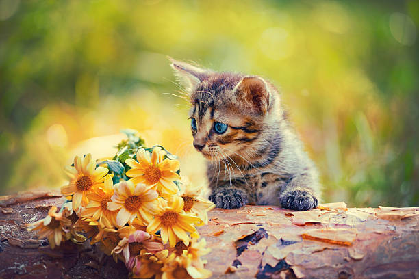 Little kitten looking at flowers picture id526598923?b=1&k=6&m=526598923&s=612x612&w=0&h=y ozfjnayyhtxczzpoc5szshxe7w6ni1w1 gbg xvp0=
