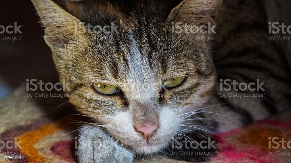 Little kitten lying on the blanket looking straight at camera royalty-free stock photo