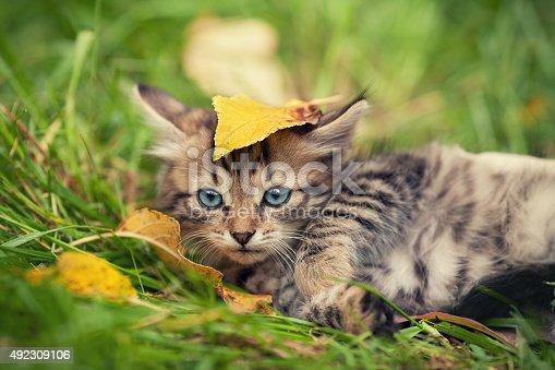 istock Little kitten lying on the grass 492309106