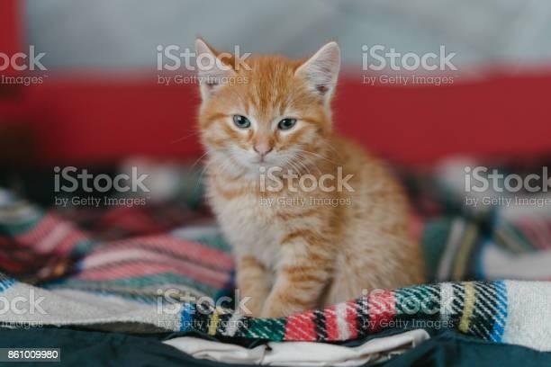 Little kitten on the plaid on the bed picture id861009980?b=1&k=6&m=861009980&s=612x612&h=llqlpwm7tckw3isgyf04 zghzdkcdqftdhrvwvwtbjc=