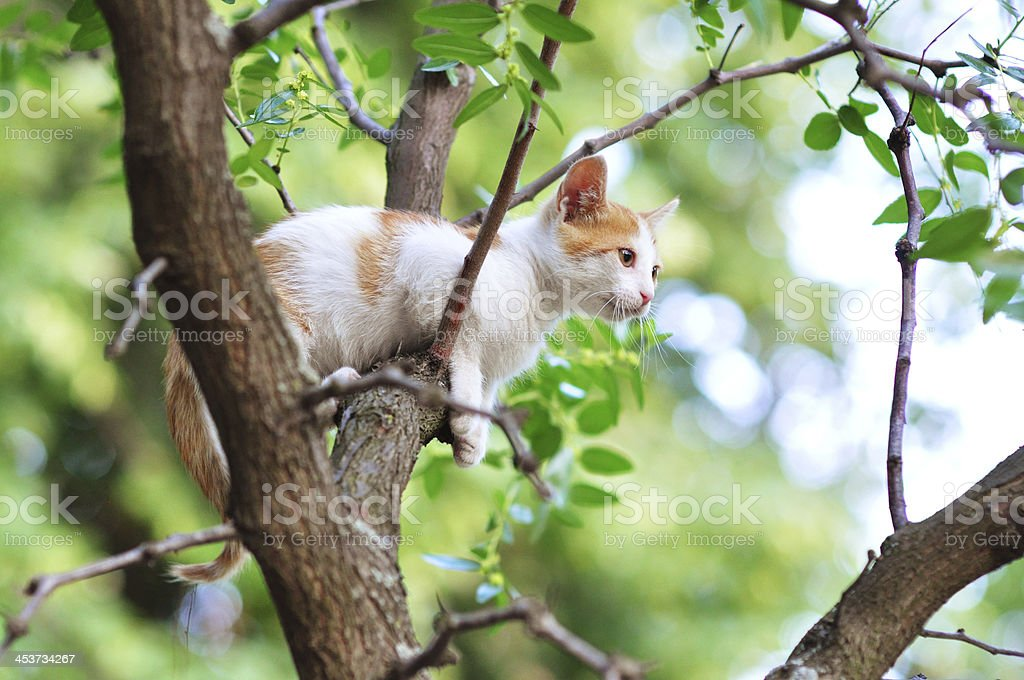 Little kitten on the tree stock photo