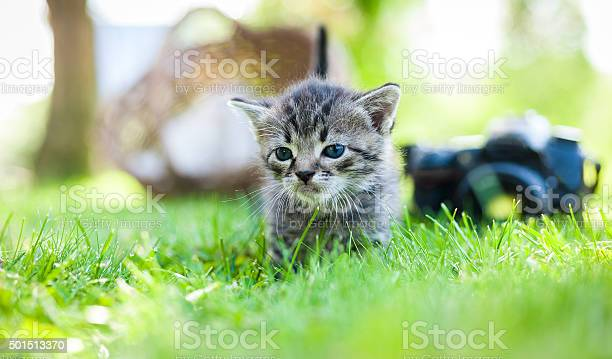 Little kitten outdoor picture id501513370?b=1&k=6&m=501513370&s=612x612&h=puum3dhw92ckcaadkb ytj7zfwqba2q8pfp8mwdpccu=