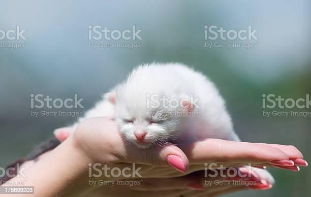 Little kitten picture id178899203?b=1&k=6&m=178899203&s=612x612&h=m iacuhed76ndtg4shuc1wrpbyyec6uexq5hofmal9w=