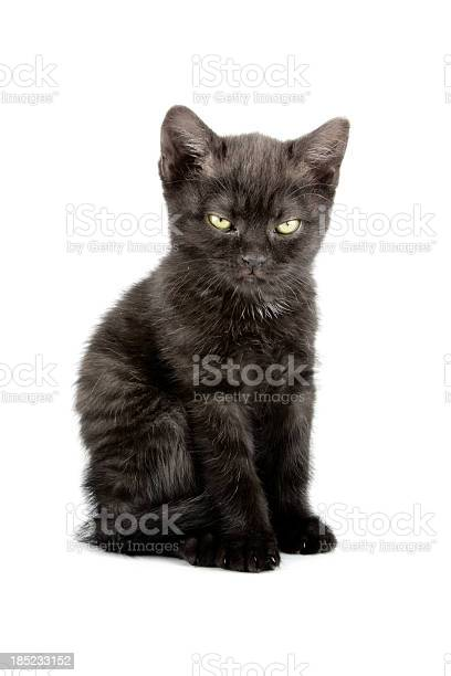 Little kitten picture id185233152?b=1&k=6&m=185233152&s=612x612&h=np b2odej0lrwbg7yj26ipr5ibm0awn6alwr0kggekw=