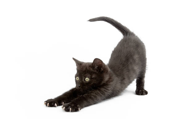 Little kitten picture id185288567?b=1&k=6&m=185288567&s=612x612&w=0&h=91eeyfhjmuwpfxvau9v w7oxjejgynq7tic ik3s2t8=