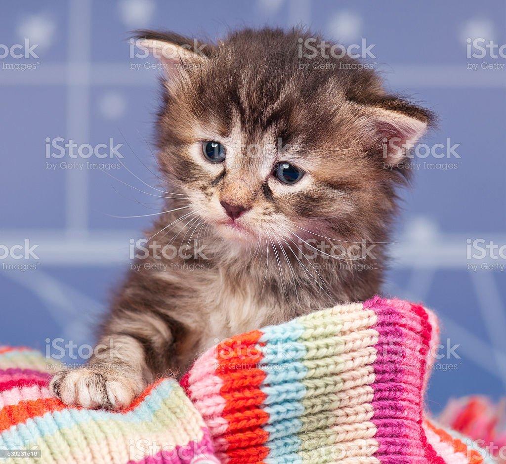 Little mascota  foto de stock libre de derechos