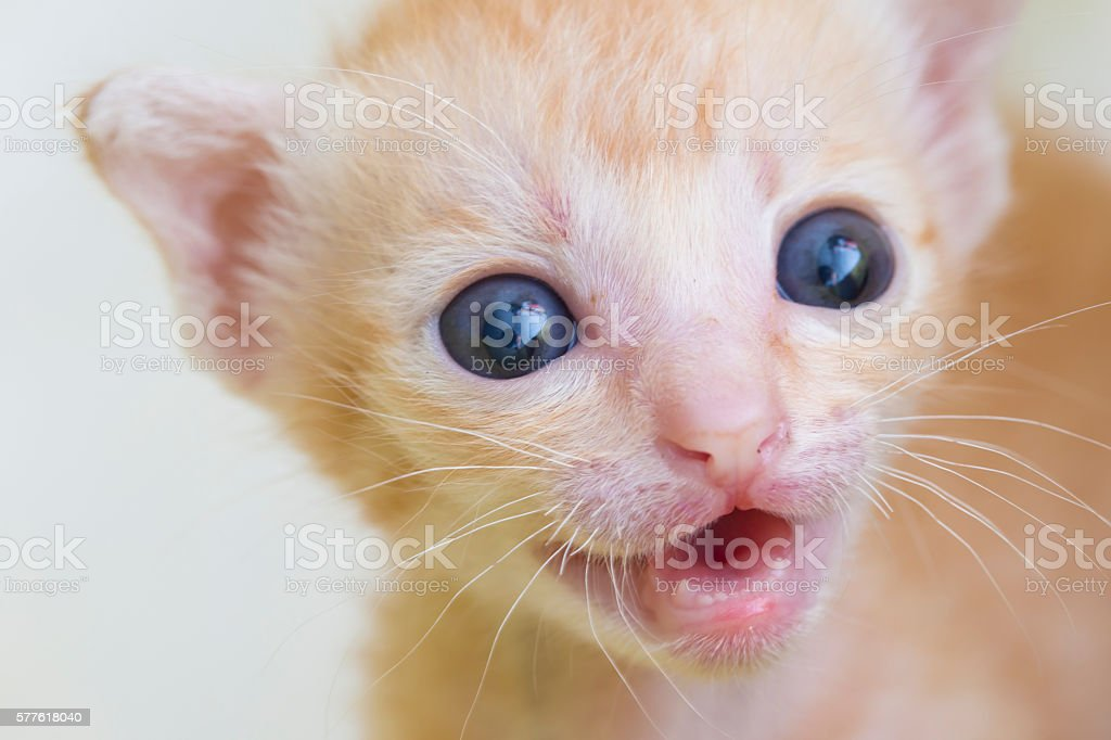 Little kitten stock photo