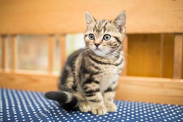 little kitten - omurgalı stok fotoğraflar ve resimler