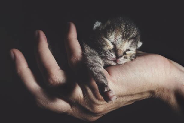 Little kitten picture id801961108?b=1&k=6&m=801961108&s=612x612&w=0&h=i9cbwsynvlt0j72tidu1d4bqsligarjdznfyuzn2wfs=