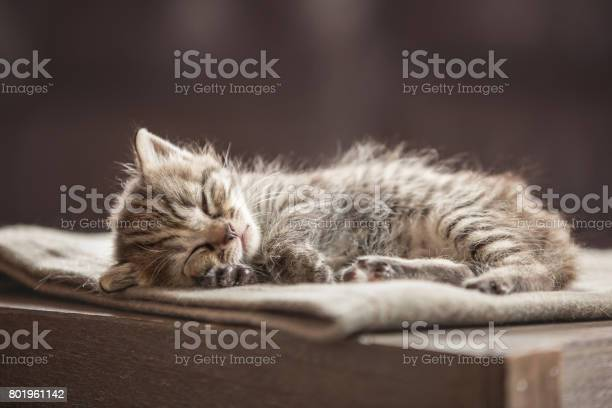 Little kitten picture id801961142?b=1&k=6&m=801961142&s=612x612&h=fguyehp2ia1thd0akzaruoxdayryywihsnbhnj7anfg=
