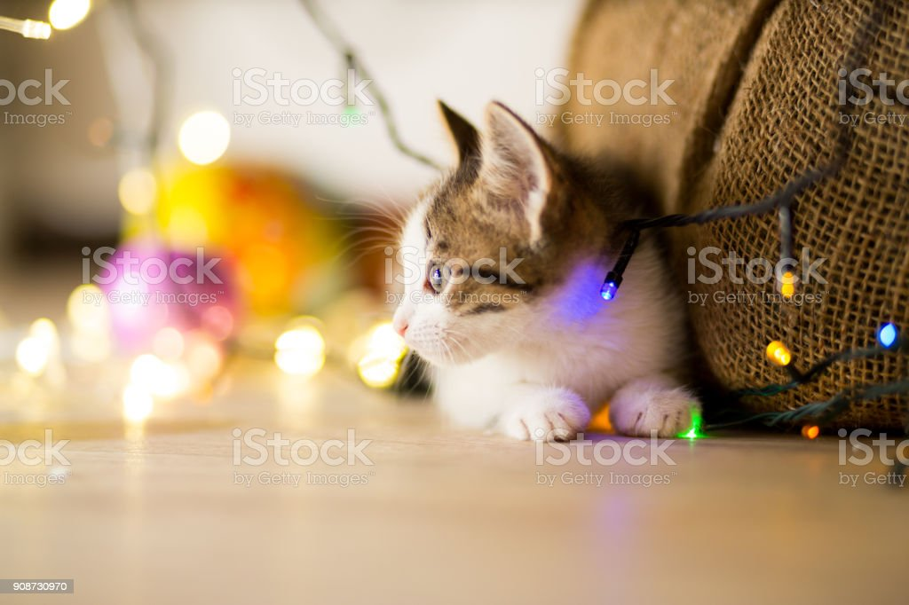little kitten plays under a Christmas tree with garlands stock photo
