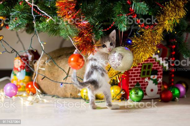 Little kitten plays under a christmas tree with garlands picture id917437064?b=1&k=6&m=917437064&s=612x612&h=lddw6bfwwsmlszljregsiqezj0kmtqkjahiuvviyycq=