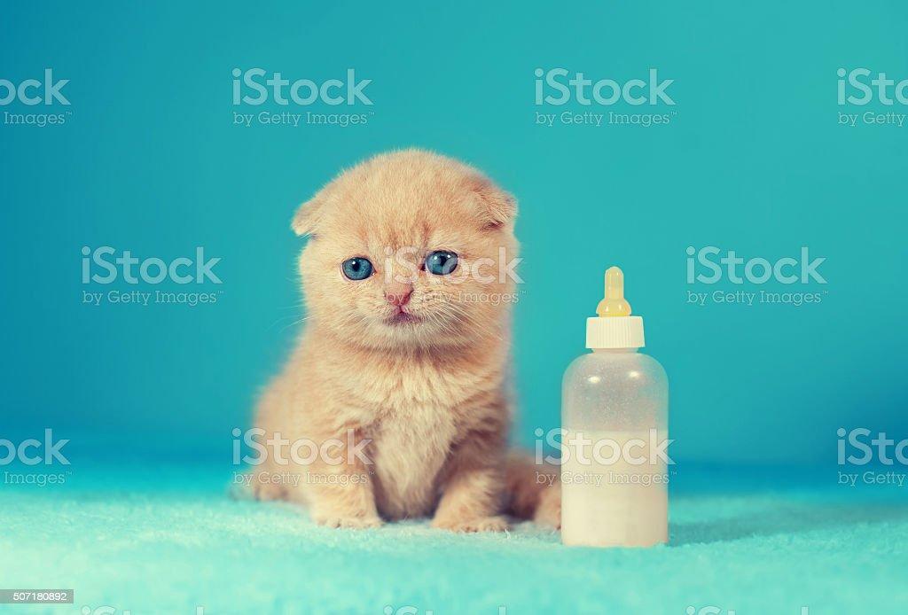 Kleines Kätzchen sitzt in der Nähe des Milch Flasche – Foto