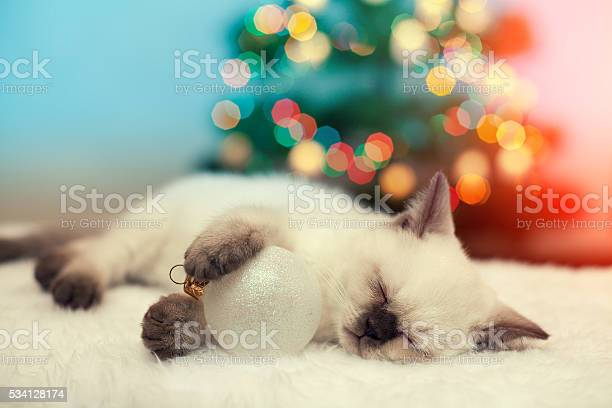 Little kitten sleeping against christmas tree with lights picture id534128174?b=1&k=6&m=534128174&s=612x612&h=oagv5 va0f3btnimiwfmnkgtr9z84jynnlxzcjd1m7i=