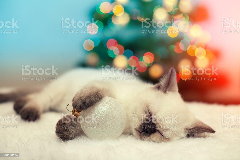 Little kitten sleeping against christmas tree with lights stock photo