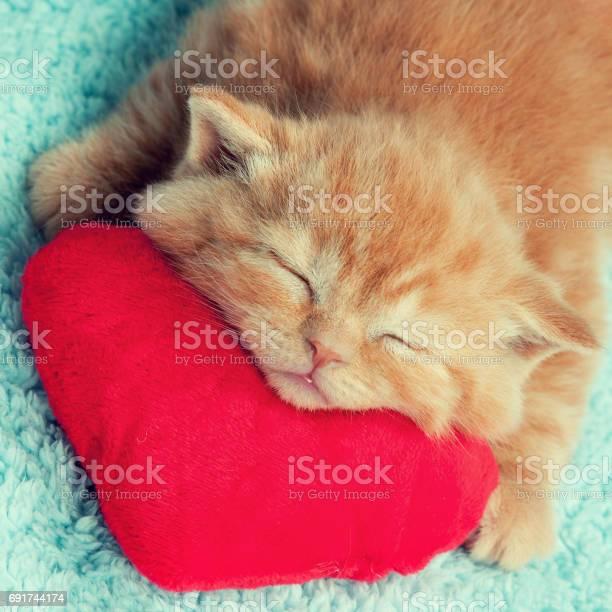 Little kitten sleeping on the red heartshaped pillow picture id691744174?b=1&k=6&m=691744174&s=612x612&h=kaok3zaik4ij lpahpcbkyuc956xddxgbdvxraznhzm=