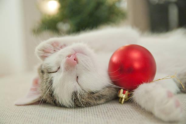 kleines kätzchen schlafen mit christbaumkugel - katze weihnachten stock-fotos und bilder