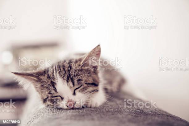 Little kitten sleeps on a coverlet small cat sleeps sweetly as a bed picture id860278640?b=1&k=6&m=860278640&s=612x612&h=uhoqf8yv9ys wv ufftkvntnqi5zxcse6fqsty kgh0=