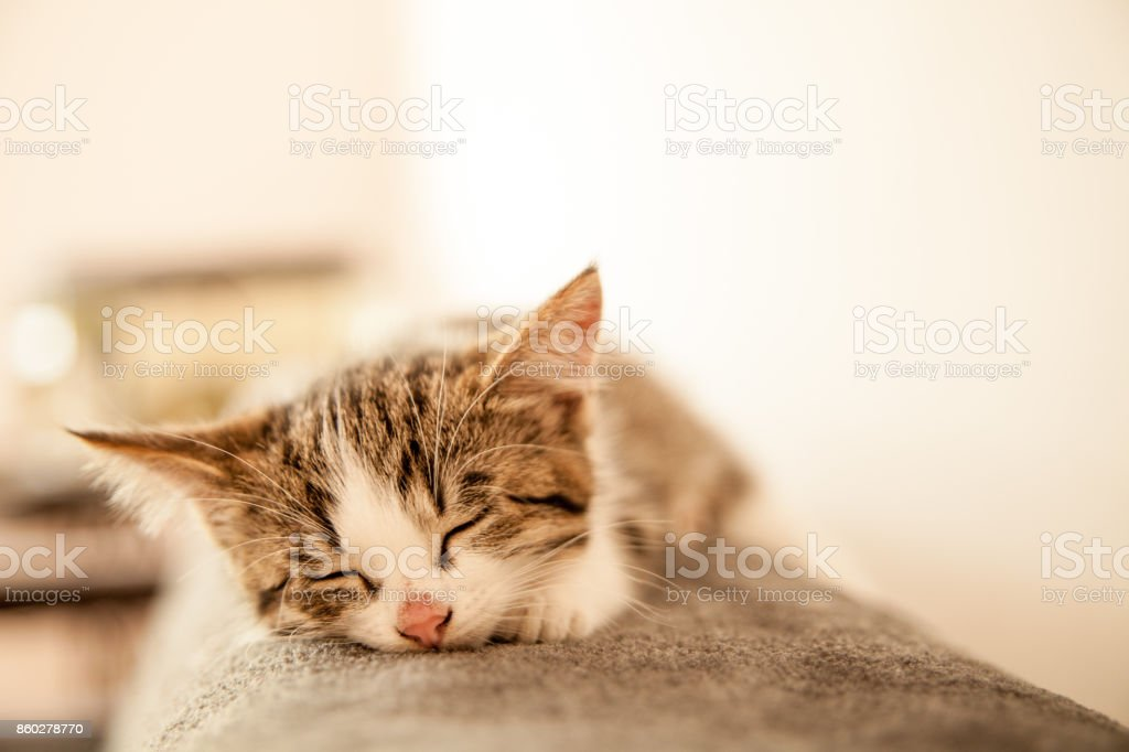 Little kitten sleeps on a coverlet. Small cat sleeps sweetly as a small bed. Sleeping cat in home on a blur light background. Cats rest after eating. – zdjęcie